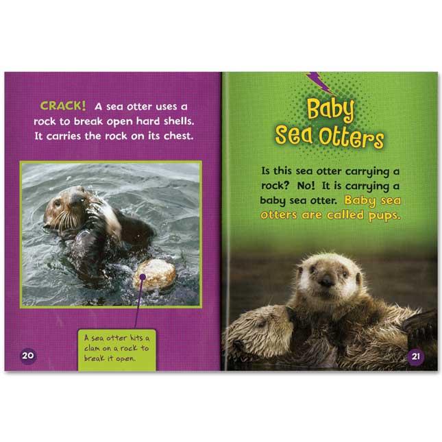 Animal Close-Ups - 11-Book Set