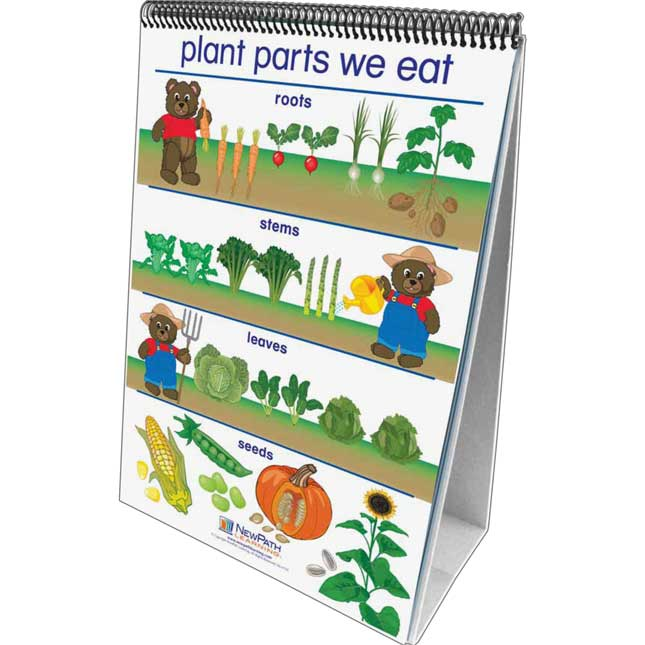 All About Plants - English